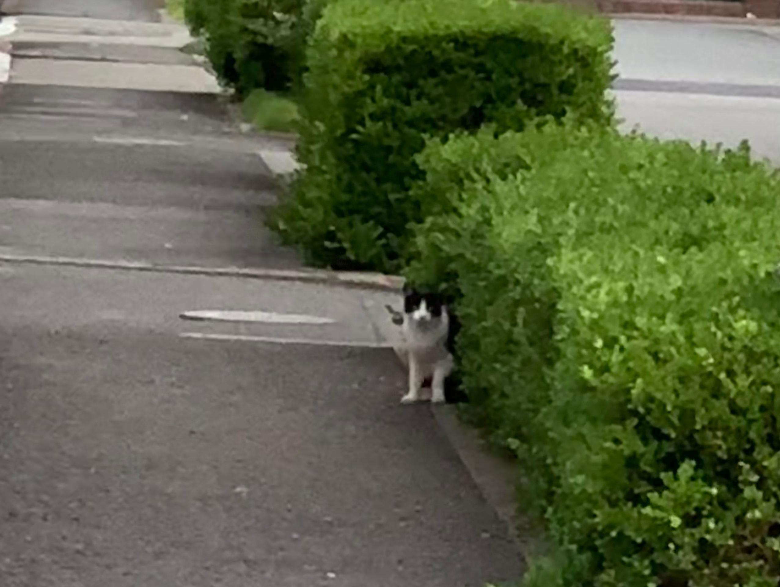 朝のウォーキングで出会った猫ちゃん